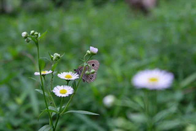 加曽利貝塚の昆虫たち01.jpg